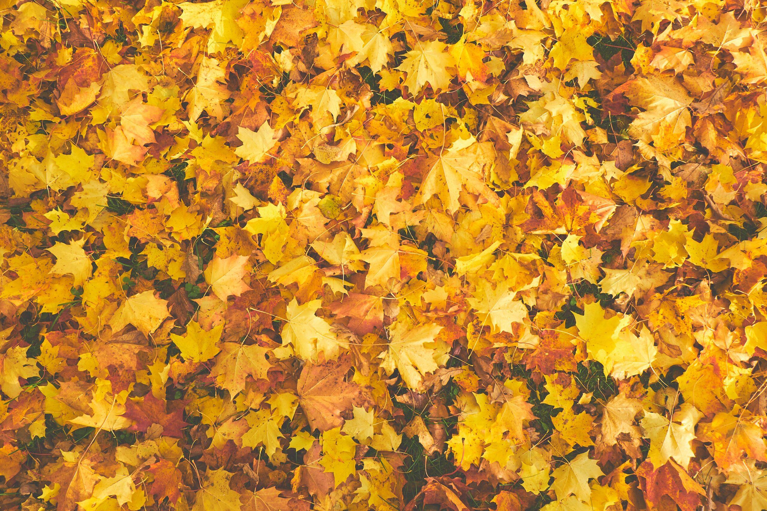 In groene doen is lekker lui en laat de bladeren gewoon liggen