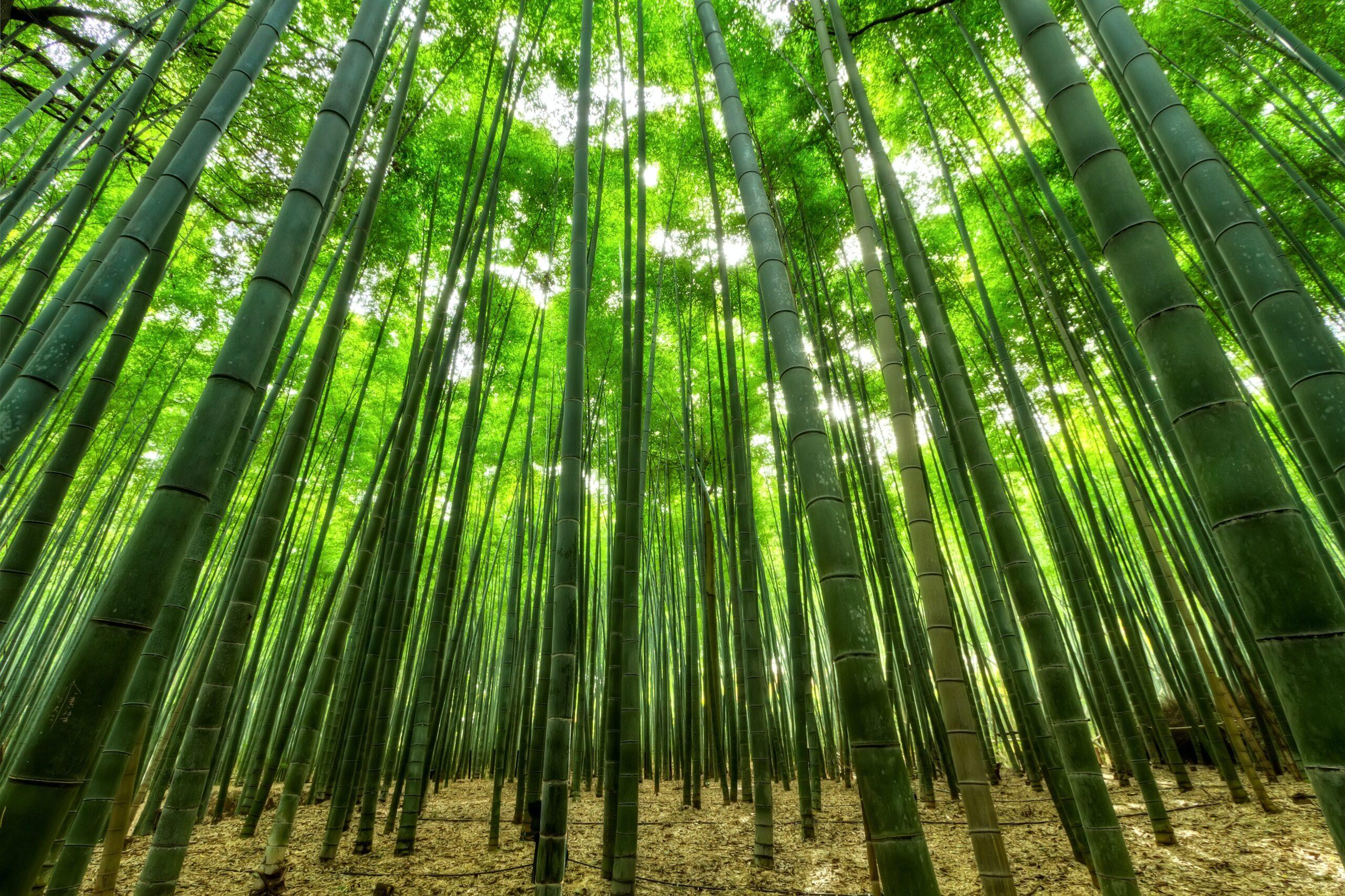 bamboe duurzaam